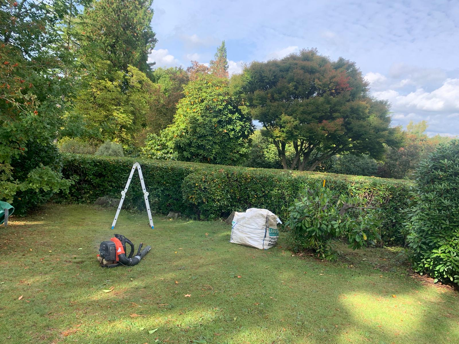 Hedge cutting Dorking