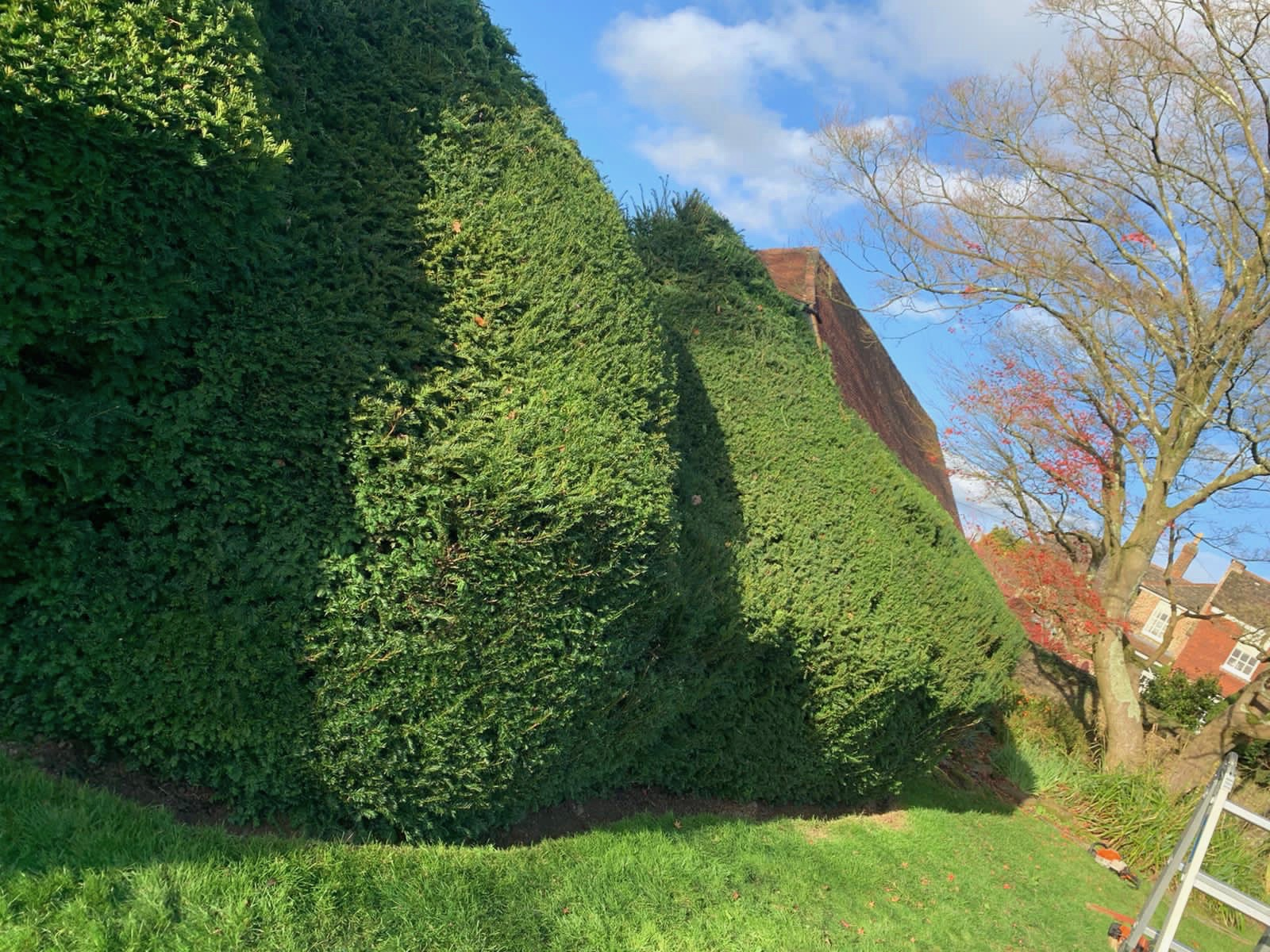 Hedge cutting Horsham