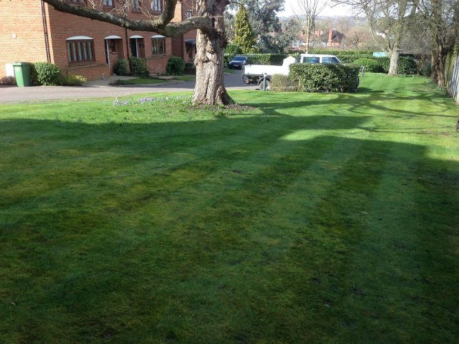 Dorking-Lawn-mowing